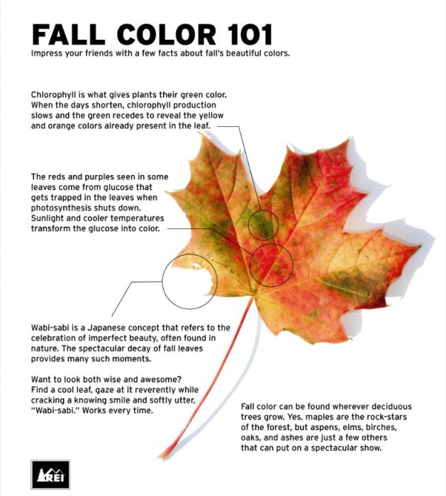 Fall Color 101