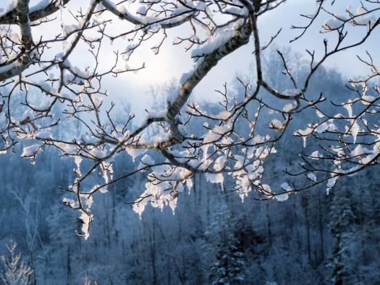 Jan18_Snow on trees_Susan Murphy