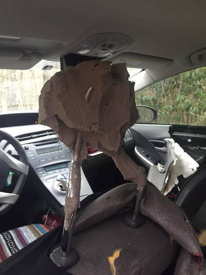 Bear in car11_Christa South