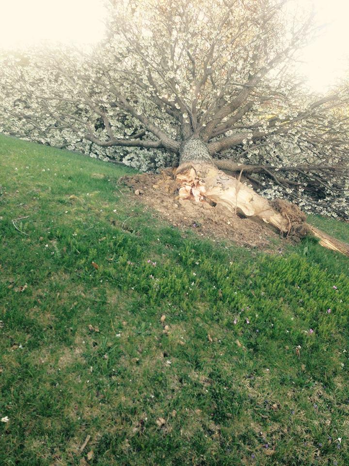 tree down 1_Libby Ward