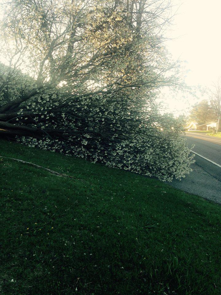 tree down 2_Libby Ward