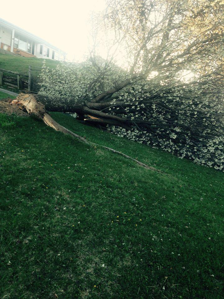 tree down 3_Libby Ward