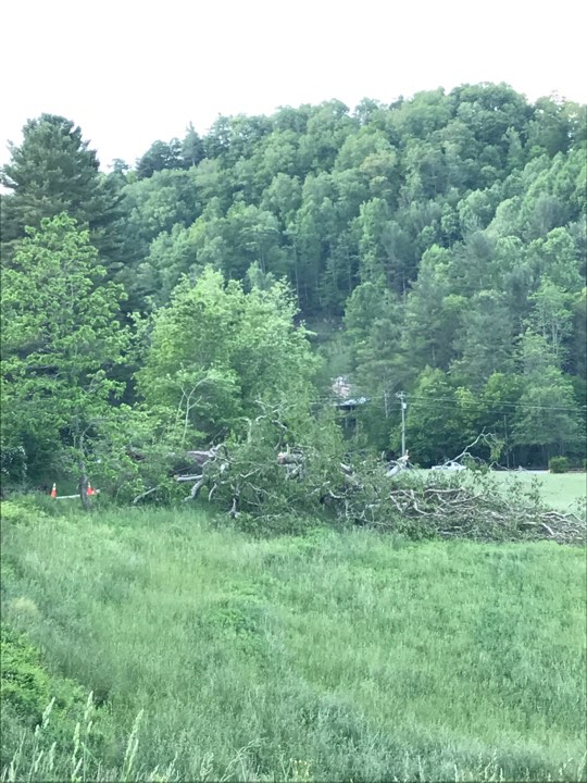 Historic Tree In Valle Crucis Topples During Storm, Believed To Be Over 300yrs Old, One Of Oldest In Watauga County