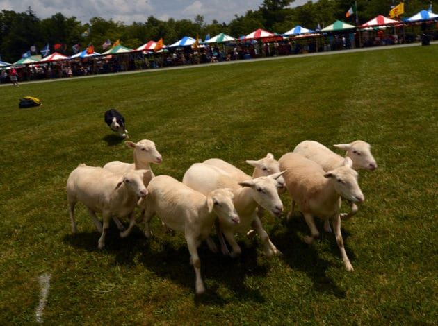 Grandfather Mountain Highland Games Return July 6-9, 2017