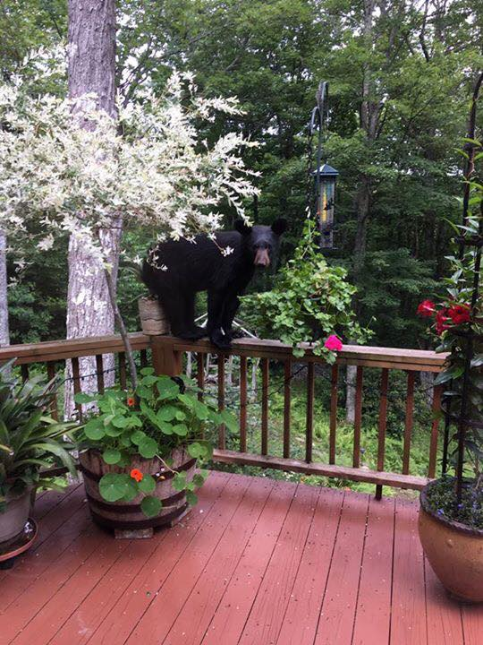 Local Black Bear Sightings On The Rise, Local Residents Share Videos & Photos