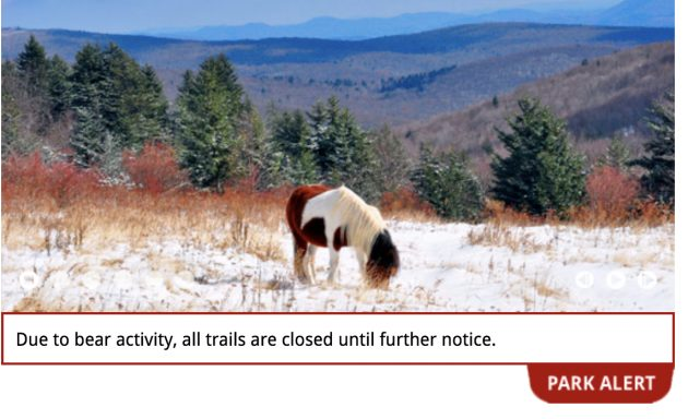 Grayson Highlands State Park In Virginia Closes Trails Due To Bear Activity