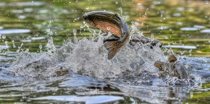 Hatchery Supported Trout Waters Open April 3, 2021