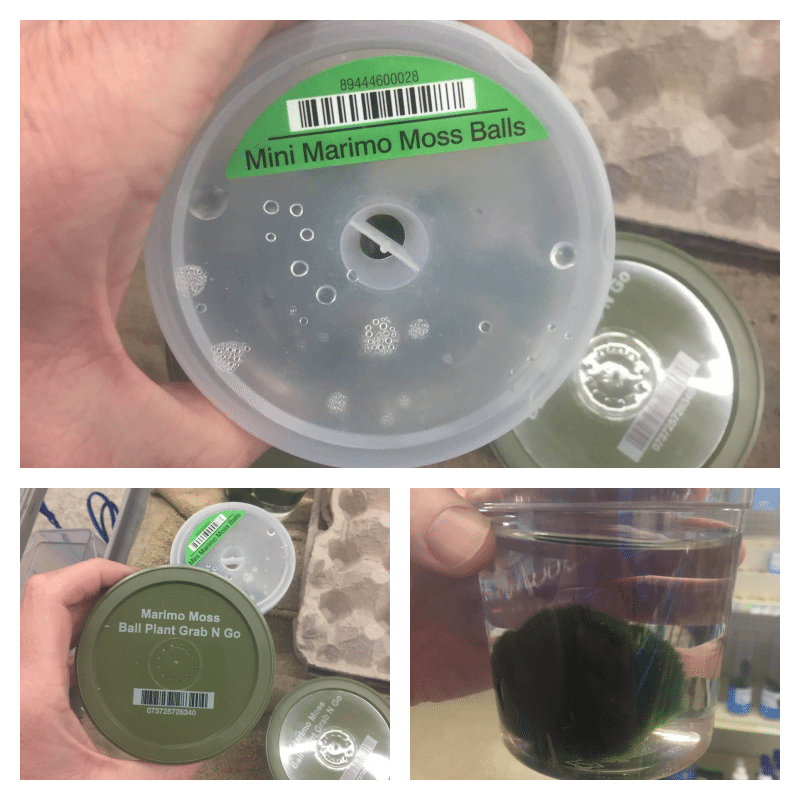 Invasive Mussel Found in Pet Store Products in North Carolina: How You Can Help!