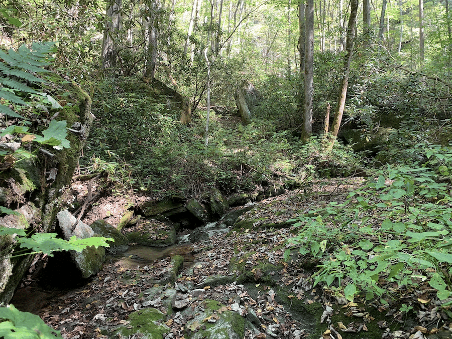 Foothills Conservancy of North Carolina purchases 118 acres along Johns River in Caldwell County for Pisgah National Forest