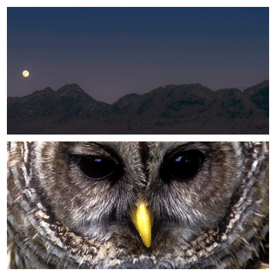 Creatures of the Night on Grandfather Mountain Oct. 2