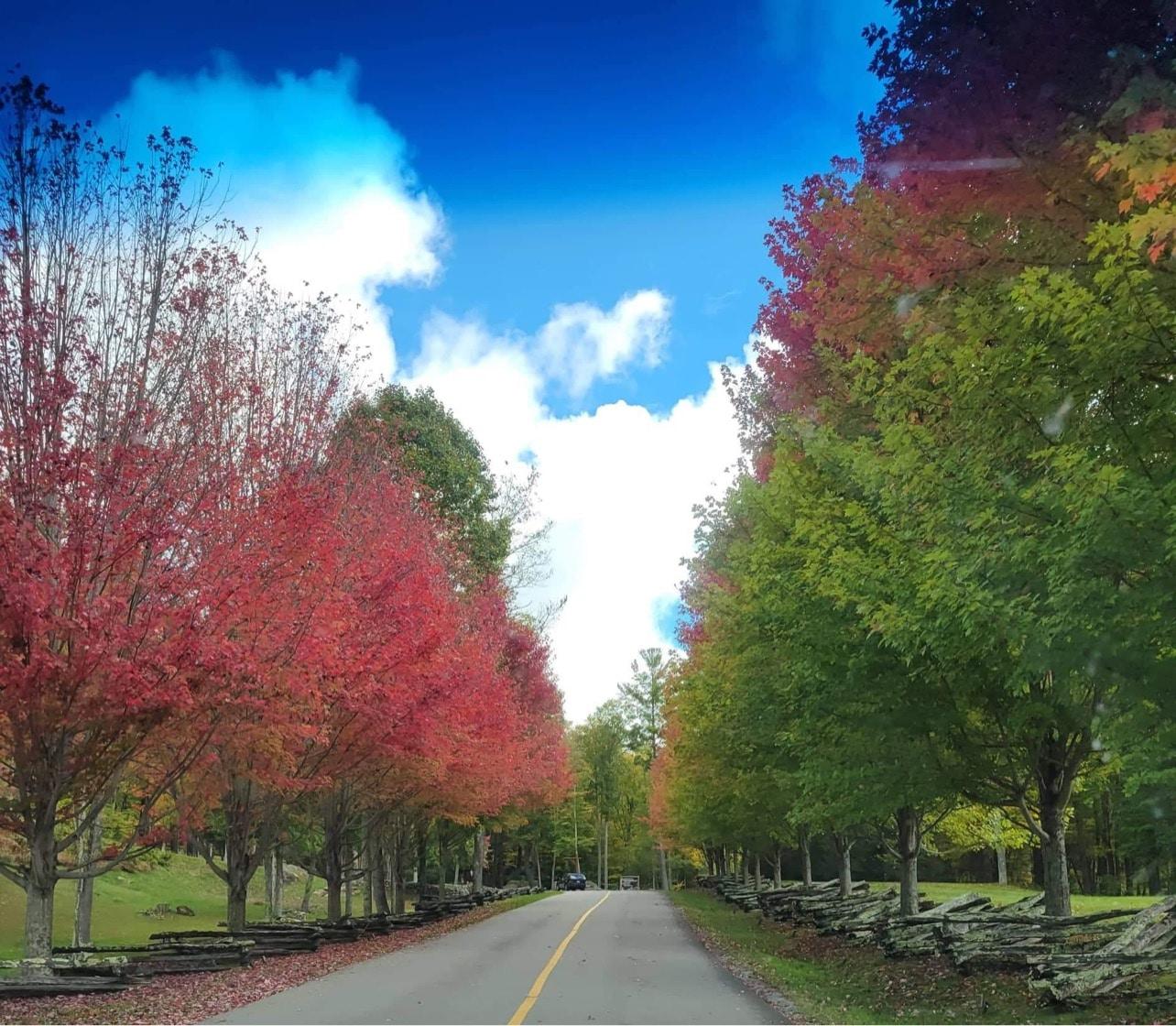 Sights of leaf weekend October 8-10, 2021